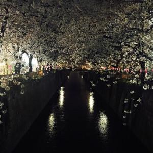夜桜 in 中目黒