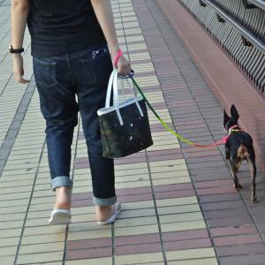 ジャンティバンティのSトートを持って愛犬とお散歩に行ってきました♪