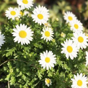 花のあるライフスタイル #18