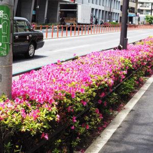 花のあるライフスタイル #20