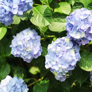 花のあるライフスタイル #21