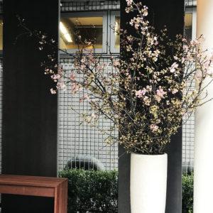 """どこよりもひと足お先に""""桜""""が咲きました♡"""