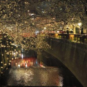 桜満開!春を感じる目黒川の桜まつり