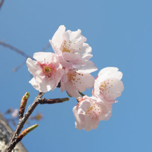 ポカポカな陽気の今日。春がついにやって来ました♡