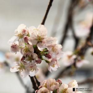 バランススタイル名古屋|HAPPY SPRING♡店内に桜が咲きました!!