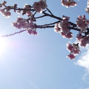【スタッフコラム】今年は写真でお花見気分に。#おウチ時間