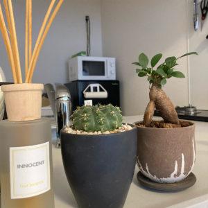 緑のあるライフスタイル!お家時間をより豊かに!観葉植物で癒やしを!