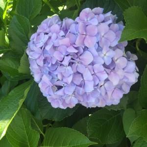 花のあるライフスタイル #13