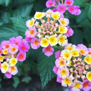 花のあるライフスタイル #14