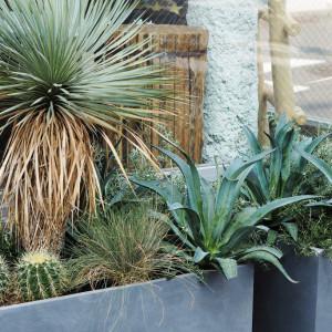 店頭エントランスが素敵な植物でパワーアップ♪