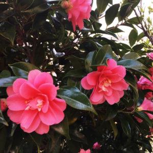 花のあるライフスタイル #19